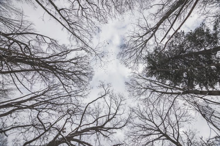 looking-up-at-winter-sky